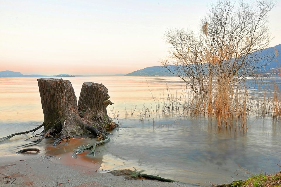 Riserva naturale di fondotoce - istanti in viaggio - 5 luoghi da visitare