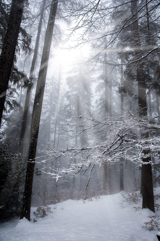 Luce nel bosco - fotografia in viaggio - istanti in viaggio - 5 errori del fotografo in viaggio