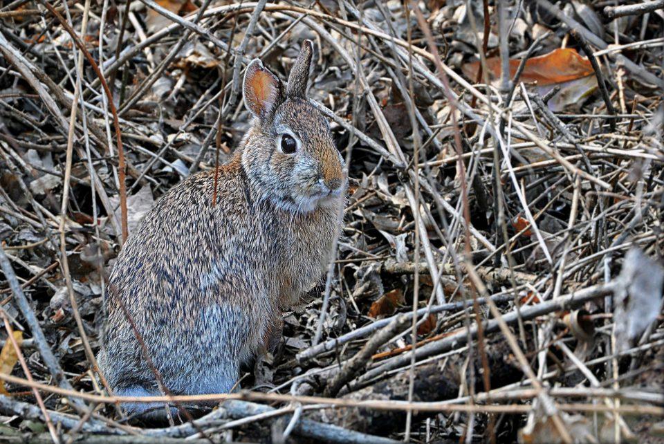 coniglio - Canneto di fondotoce - fondotoce - riserva naturale di fondotoce - istanti in viaggio - lago maggiore - verbania